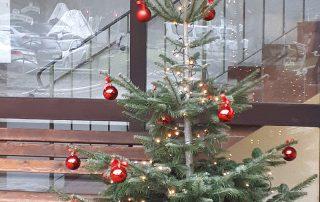 Weihnachtsbaum im Haus Wittelsbach