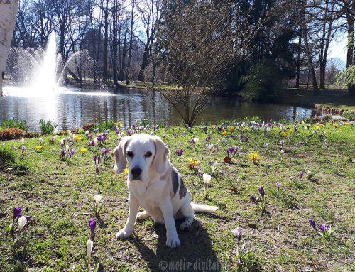 Frühlingsspaziergang im Kurpark Bad Aibling