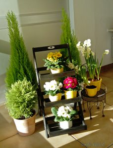Frühlingsblumen Haus Wittelsbach
