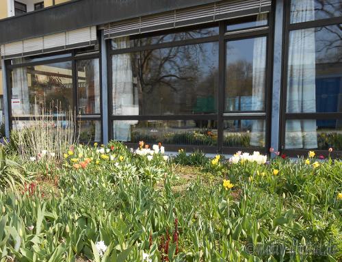 Frühling rund um das Haus Wittelsbach