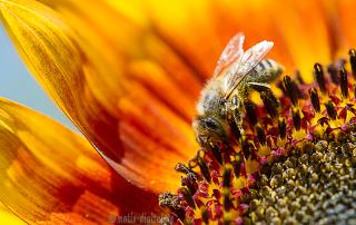 rettet die Bienen - motiv-digital
